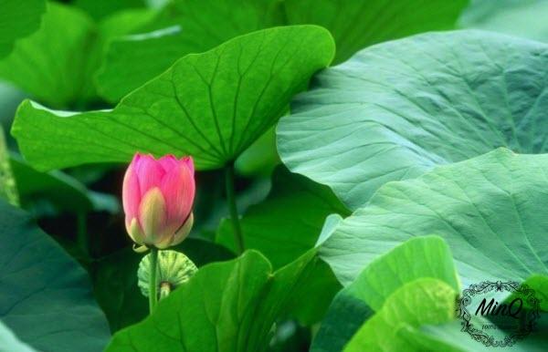 Trà giảm cân Mộc Minh - thảo mộc cho cơ thể khỏe đẹp